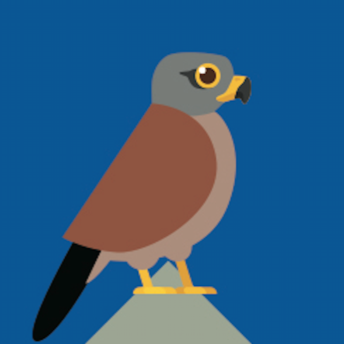 Onze nieuwe bird?