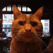 Huiskat Piep